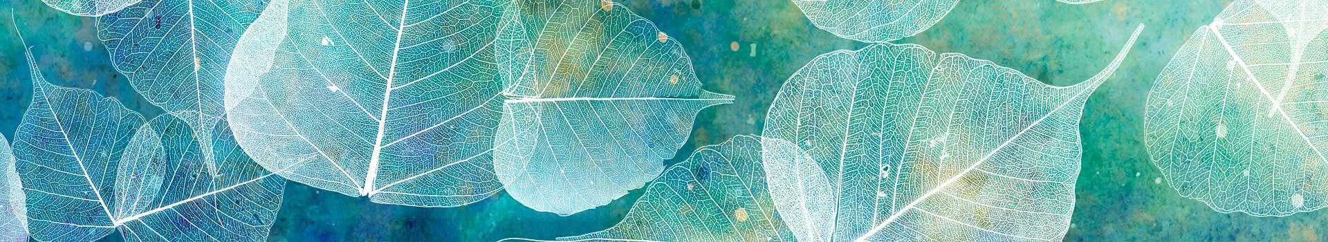 Türkiz levelek-kognitív terápia